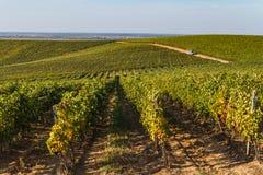 Vineyards in Ukraine royalty free stock photos