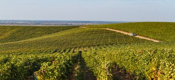 Vineyards in Ukraine royalty free stock photography