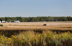 Landscape with a combine harvesting soybeans Royalty Free Stock Photography