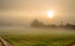 Landscape of Corn Farming Field and Sunrise in the Mist Royalty Free Stock Photography