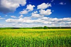 Landscape - corn field Stock Images