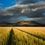 Landscape of corn field and mountains Stock Photos