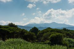Landscape of Corsica mountains, faded in mist. Trees and bunches in foreground, mountains in background. Green and fresh beautiful royalty free stock photo