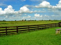 Landscape countryside. With green grass and blue sky Royalty Free Stock Image