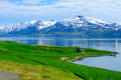 Landscape and countryside along the Eyjafjordur Royalty Free Stock Images