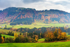 Landscape of a countryside with autumn trees in Alps Royalty Free Stock Images