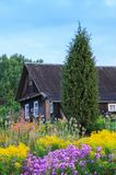 Landscape in countryside with old wooden rural house building and bright wildflowers in bright warm summer day. Landscape in countryside with old wooden rural stock photography