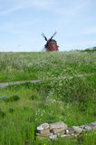 Landscape with cow parsley and an old wooden windmill. At the swedish island Oland Royalty Free Stock Images