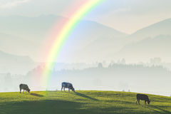 Landscape with Cows and Rainbow Royalty Free Stock Image