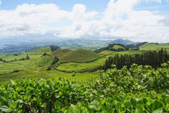 Landscape with cows, Sao Miguel, The Azores Islands, Portugal Stock Image