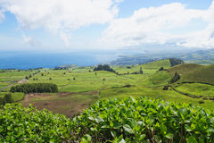 Landscape with cows, Sao Miguel, The Azores Islands, Portugal Royalty Free Stock Photography