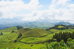 Landscape with cows, Sao Miguel, The Azores Islands, Portugal Stock Images