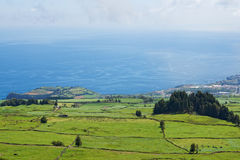 Landscape with cows, Sao Miguel, The Azores Islands, Portugal Royalty Free Stock Photos