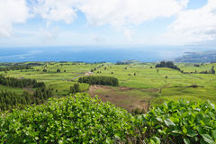 Landscape with cows, Sao Miguel, The Azores Islands, Portugal Stock Photography