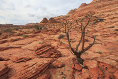 Landscape of Coyote Buttes North wilderness area Royalty Free Stock Photography