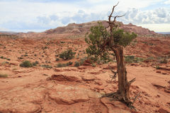 Landscape of Coyote Buttes North wilderness area Stock Photo