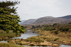 LANDSCAPE WITH THE CROCODILE RIVER Royalty Free Stock Image