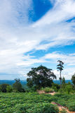 Landscape of cultivated area against blue sky and cloudy Royalty Free Stock Photography