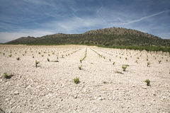 Landscape with cultivation Stock Image