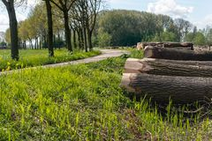 Landscape with curved country road and felled trees. Felled poplar trees on a pile in the verge of a curved country road. It is a sunny day in the spring season Stock Photography