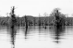 Landscape of cypress trees Stock Image