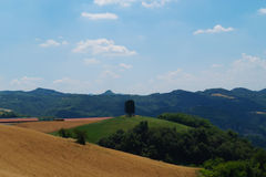 Landscape with cypresses and wheat fields Stock Photo