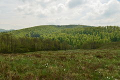 Landscape with the Daffodils Glade (in Romanian: Poiana Narciselor) and forest. Stock Image