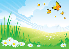 Landscape_Daisy. Beautiful Spring Background with Daisies and Butterflies Stock Images