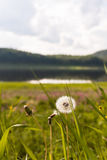 Landscape with dandelion. Tunguska river. Stock Photography