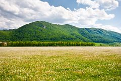 Landscape with dandelions field and mountains Stock Photos