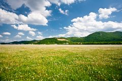 Landscape with dandelions field and mountains Royalty Free Stock Image