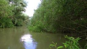 Landscape in Danube Delta stock video