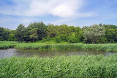 Landscape from Danube Delta Royalty Free Stock Photo