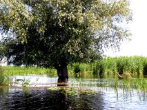 Landscape in Danube Delta, Tulcea, Romania Royalty Free Stock Photos