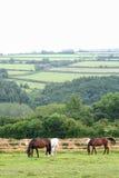 Landscape of Dartmoor National Park Stock Photos