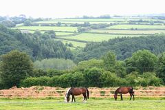 Landscape of Dartmoor National Park Royalty Free Stock Photo