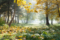 Landscape at dawn autumn morning Stock Photography