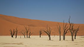Dead Acacia trees in DeadVlei, Sossusvlei, Namibia. Landscape of Dead Acacia trees in DeadVlei, Sossusvlei, Namibia stock photos
