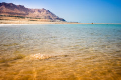 Landscape with dead sea Stock Images