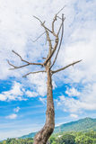 Landscape with dead tree , mountain and blue sky Stock Images