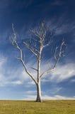 Landscape with dead trees. Bingie. Nsw. Australia. Stock Photography