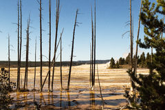 Landscape with dead trees in Yellowstone National park,WY,USA. Landscape with dead trees,reflection in water,steam,blue sky  in Yellowstone National park,WY,USA Royalty Free Stock Image