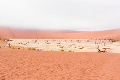 Landscape of Dead Vlei, Namibia Royalty Free Stock Photo