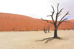 Landscape of Dead Vlei, Namibia Royalty Free Stock Images