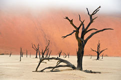 Dead Vlei, Namibia, South Africa Stock Photo