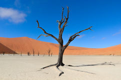 Dead Vlei, Namibia, South Africa Royalty Free Stock Photography