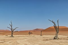 Landscape of death vlei, dead and dry trees with red dunes in Sossusvlei. Namibia. Africa stock photos