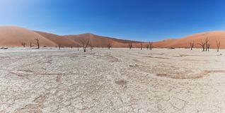 Landscape of death vlei, dead and dry trees with red dunes in Sossusvlei. Namibia. Africa stock photography