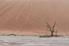 Landscape of death vlei, dead and dry trees with red dunes in Sossusvlei. Namibia. Africa royalty free stock photos