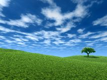 landscape den ensamma treen Arkivfoto